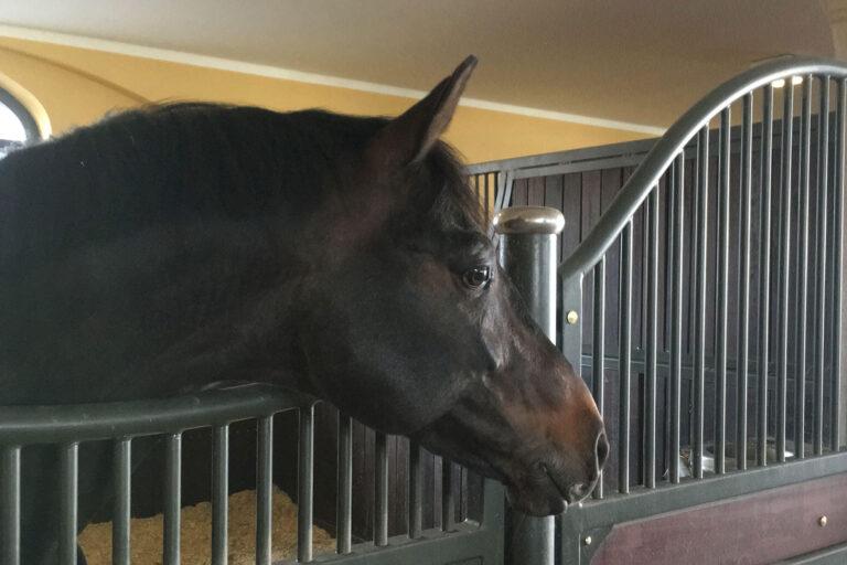 Tierarzt-Dr-Stelzer-Pferde-HPH-793
